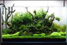 aquarium | fish tank | aquascape | aquascaping / This is a collection of aquariums, aquascaping, hardscapes, vivariums and aquatic plants that inspire my plant designs. Credit to image is always listed when know.