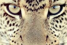 Leopard {LOVE} / http://whiteblack-amorwanilja.blogspot.fi/