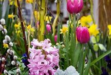 Spring Blooms / Welcome spring! Here's a collection of our favourite spring blooms and bulbs.