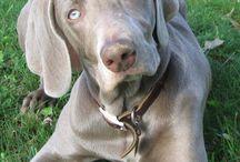 Pups / by Rachel Golden