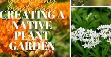 Gardening Made Easy / Learn how gardening can be easy. We are here to guide you through creating a garden, growing vegetables or herbs, tropical plants and more!