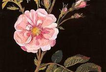 Botanical Pick Me Up / Botanical artwork from all around the world.
