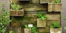 Vertical Gardening / Tight on space? Don't let that stop you from trying the latest trend of vertical gardening.
