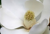 COLOR - White