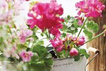 Beautiful Flowers / by Colleen Sullivan Blake