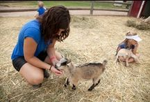 Family Attractions / From animals to history to just plain fun, the Black Hills will entertain your family.