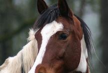 Horses / by Kerwin Schetter