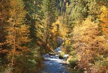 Black Hills Autumn Splendor / It really is one of the best times to explore the area.