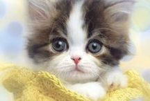 Cat products and photos