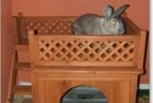 House rabbit furniture / by iddle duck