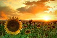 Sunsets / Sunsets - Fotos de por do sol