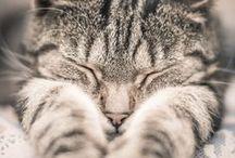 •Cute• / WarmFuzzies / by Jamie Yuerek