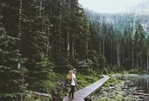 ► Mist, moss and lichens