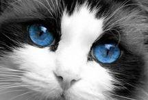 CAT EYES!