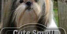 Cute Small Dog Breeds / Amazing Dog Breeds that are less than 22 pounds