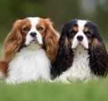 """Kid Friendly Dogs / Some dogs are just better for families than others.  These are my favorite """"Kid-Friendly Dog Breeds"""
