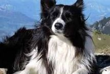 List of Dog Breeds / A List of Dog Breeds from all over the world.