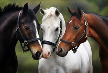 Horses, unicorns, etc.
