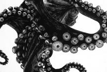 Blanco y Negro / by Marte Frisnes Jewellery