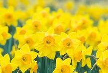 ☼ Spring! ☼ / Spring inspiration / Wiosenne inspiracje