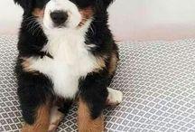 Future Dog