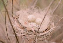 Nesting /