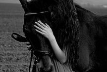 the horse / by Christi Pier