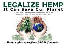 Cannabis and Hemp / by Nicklas