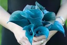 Bouquet Blue