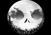 Halloween/Thanks-giving autumn  / by Sylvia Coelho
