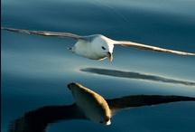 Birds / by Deborah McCroskey
