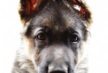 Puppies / by Francesca Lobban