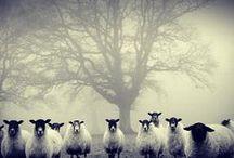 Animals / by Ddorang Kkaje