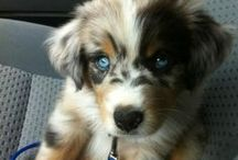 Puppy.... Someday Soon / Planning for our hopefully someday soon fluffy new edition: )  Making the transition to puppy ownership just a lil sweeter... / by Tulsa Hosmer Schappell