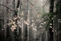 풍경 / by Ddorang Kkaje