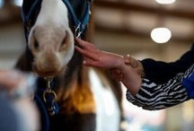 Horses = Therapy Tools / Horse therapy- Utiliazing the horse as a physical therapy tool. Hippotherapy is a treatment strategy used by therapists. That is hippotherapy = a physical therapist using a horse as a dynamic surface tool. / by Jennifer Samuels