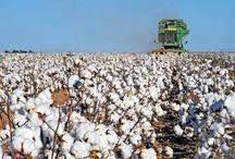 Crops: Cotton / by Georgia Farmer