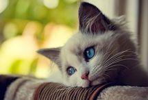 Cats ❤️ / Cats info & humor / by Jennifer Samuels