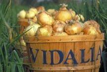 Georgia Vidalia Onions / by Georgia Farmer
