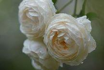 Flowers! / by Ddorang Kkaje