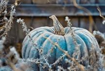 Falling into fall  / by Marcie Flint