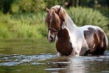 Equus / Our furry soul mates