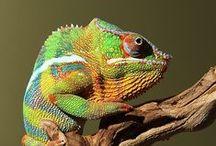 Reptiles/Amphibians/Crustacean / by Rhonda Davis