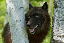 Wild dogs / by Rhonda Davis