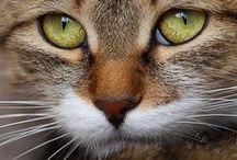 Cats (domestic) / Please do not take more than 10 pins without following me. / by Rhonda Davis