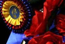 Show Secrets / Secrets for that sparkling horse and rider in the ring