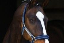 Halters & Leads / How else would we stay attached to our horse?