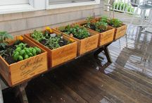 Gardens & Outdoors  / Landscaping, vegetable gardens and outdoor entertainment ideas