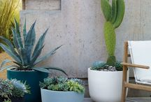 garden / Gardening - containers, plants, seeds, inspiration / by E M