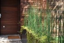Exteriors: front garden ideas